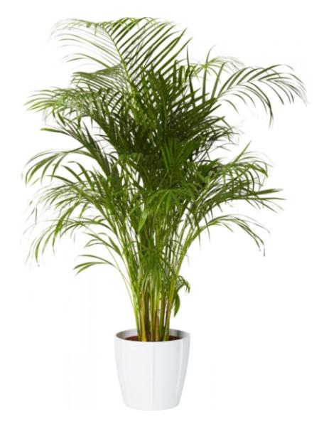 lättskötta gröna växter