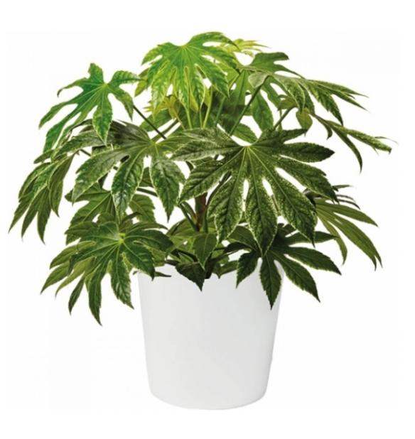 höga gröna växter