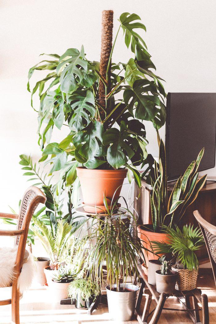 stora gröna växter inomhus