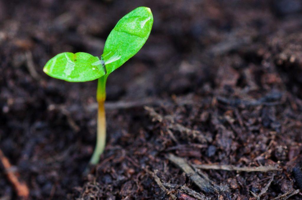 Litet växtskott