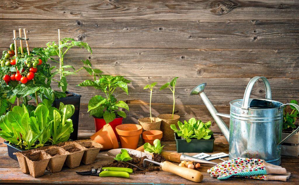 Plantera i växthus
