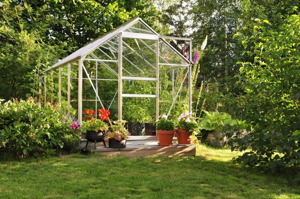 Växthus i glas med pelargoner